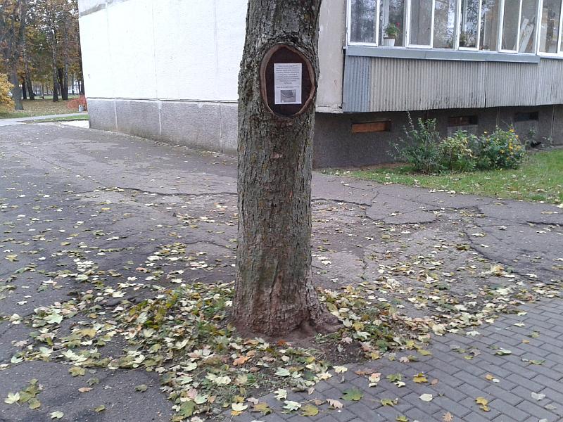 20140923-pavojingi-bortai-ziedineje-sankryzoje-elektrenuose-29.jpg