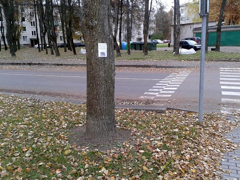 20140923-pavojingi-bortai-ziedineje-sankryzoje-elektrenuose-30.jpg